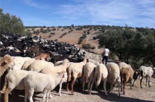 El pozo en Marruecos, donado por nuestra Iglesia